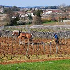Gevrey-Chambertin 1er Cru Fonteny